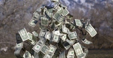 'Money does not grow on trees, not even in Vermont.' (Photo: Taylor Hinton/Getty Images)