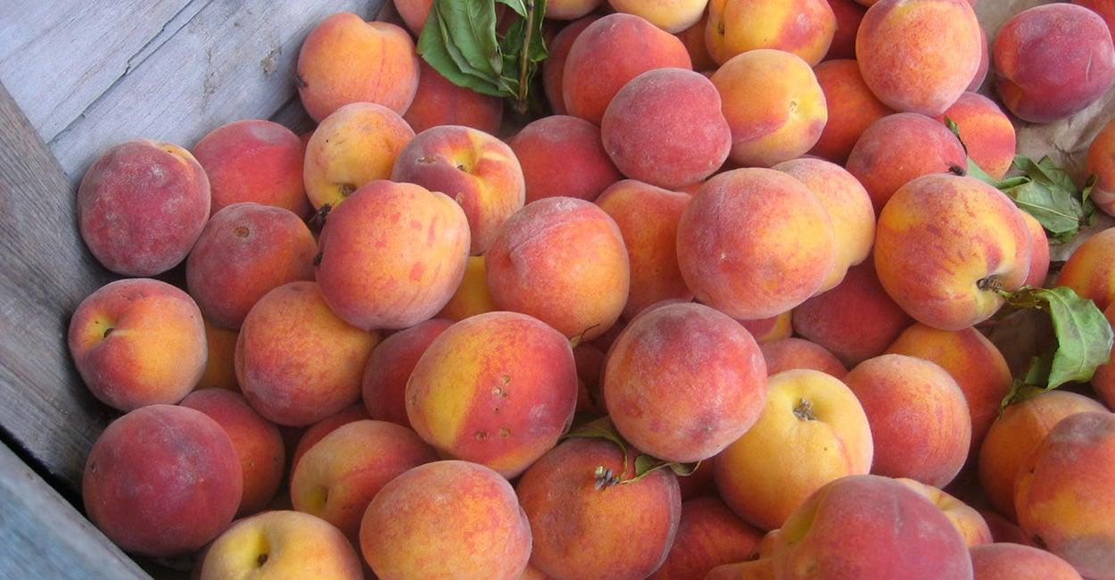 EPA Regs Likely to Kill 68-Year-Old Louisiana Peach Orchard