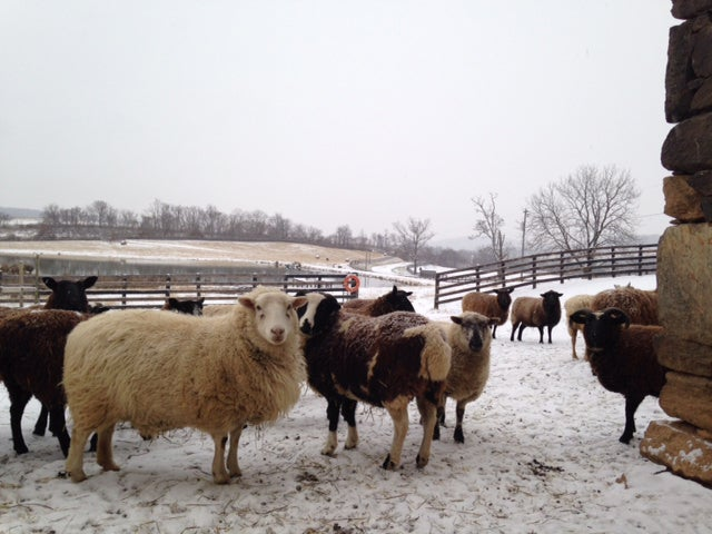 Boneta Farm in the winter. (Photo: Martha Boneta)