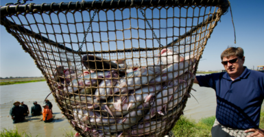 President Barack Obama called for eliminating the USDA catfish inspection program in his fiscal year 2014 budget.  (Photo: Manny Crisostomo/ZUMA Press/Newscom)