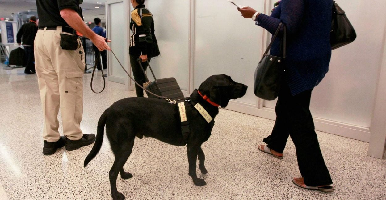 Bomb sniffing dogs failures show need to privatize screening bomb sniffing dogs in airports across the united states are failing to pass certification tests photo joe skipperreutersnewscom xflitez Images