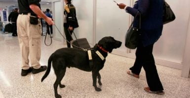 Bomb-sniffing dogs in airports across the United States are failing to pass certification tests. (Photo: Joe Skipper/Reuters/Newscom)