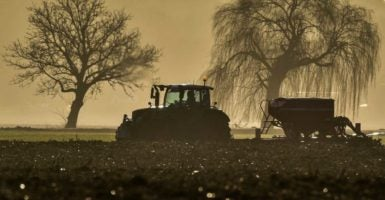 """There are numerous hidden costs associated with """"safety net"""" farm bill subsidies. (Photo: Patrick Pleul/dpa/picture-alliance/Newscom)"""