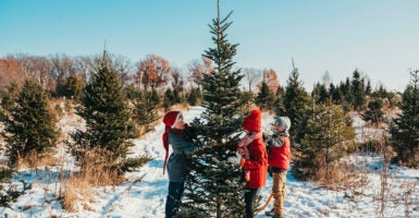 Christmas Michigan.Michigan Brothers Fight Town S Retaliation In Christmas Tree