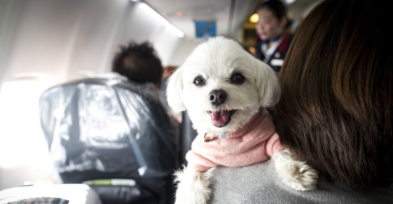 Common Sense Winning on Fake 'Service' Animals in Planes