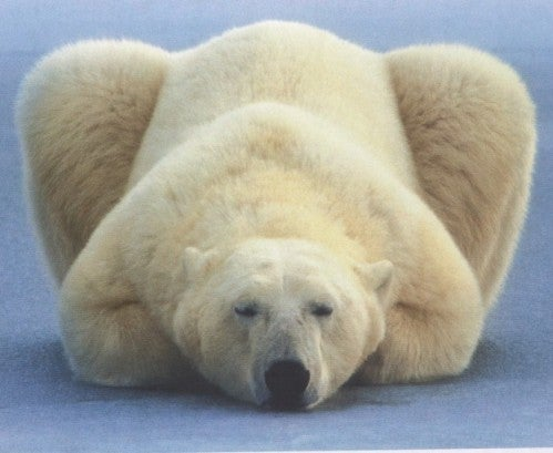 an analysis of the polar bears in the endangered species act I strongly believe that adding polar bears to the list under the endangered species act is the wrong move at this time.