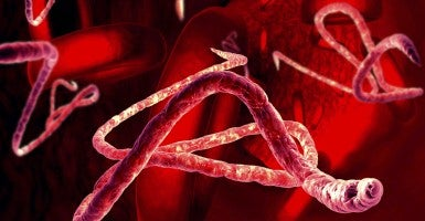 An illustration of Ebola virus. (Photo: Getty Images)