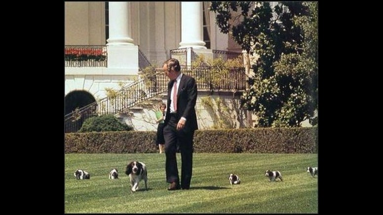 Bush walks onto the White House lawn with Millie and  her new puppies. (Photo: U.S. Embassy Jakarta Flickr)