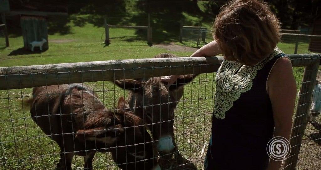 Cynthia-Donkeys