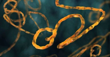 Mistakes were made in the handling of the Ebola crisis. (Photo: Bumbasor / iStock)