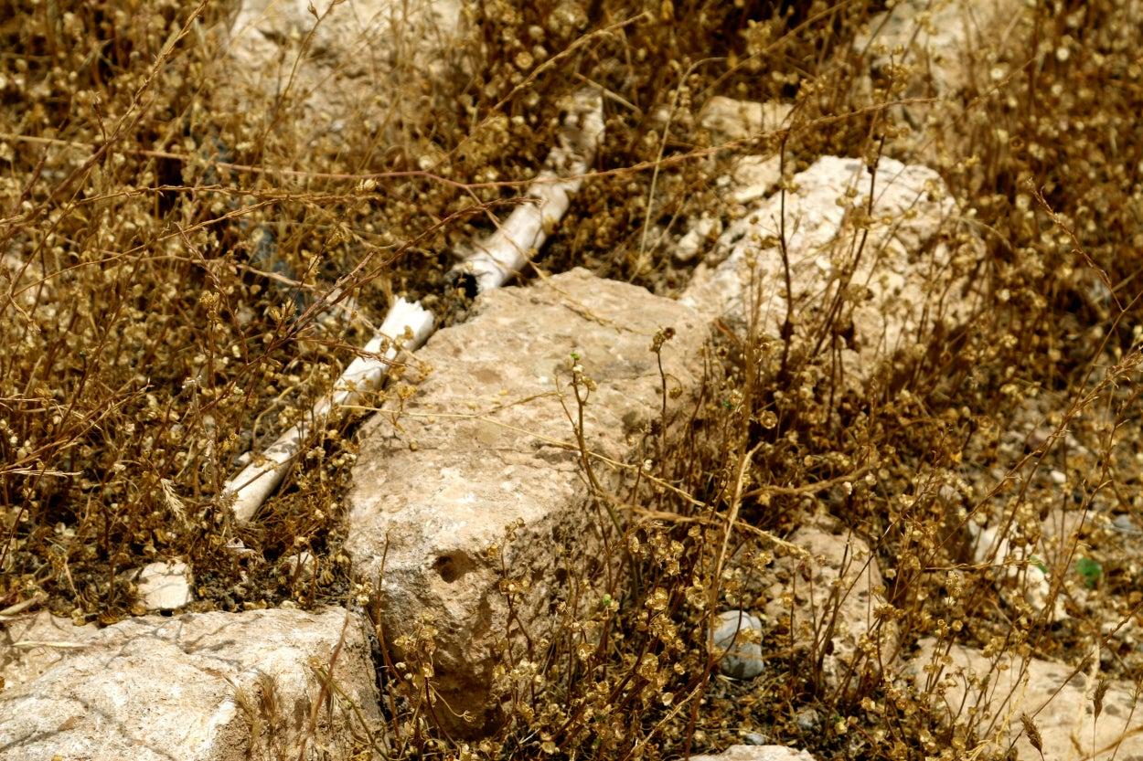 Human bones at a mass grave in Sinjar, Iraq. (Photos: Nolan Peterson/The Daily Signal)
