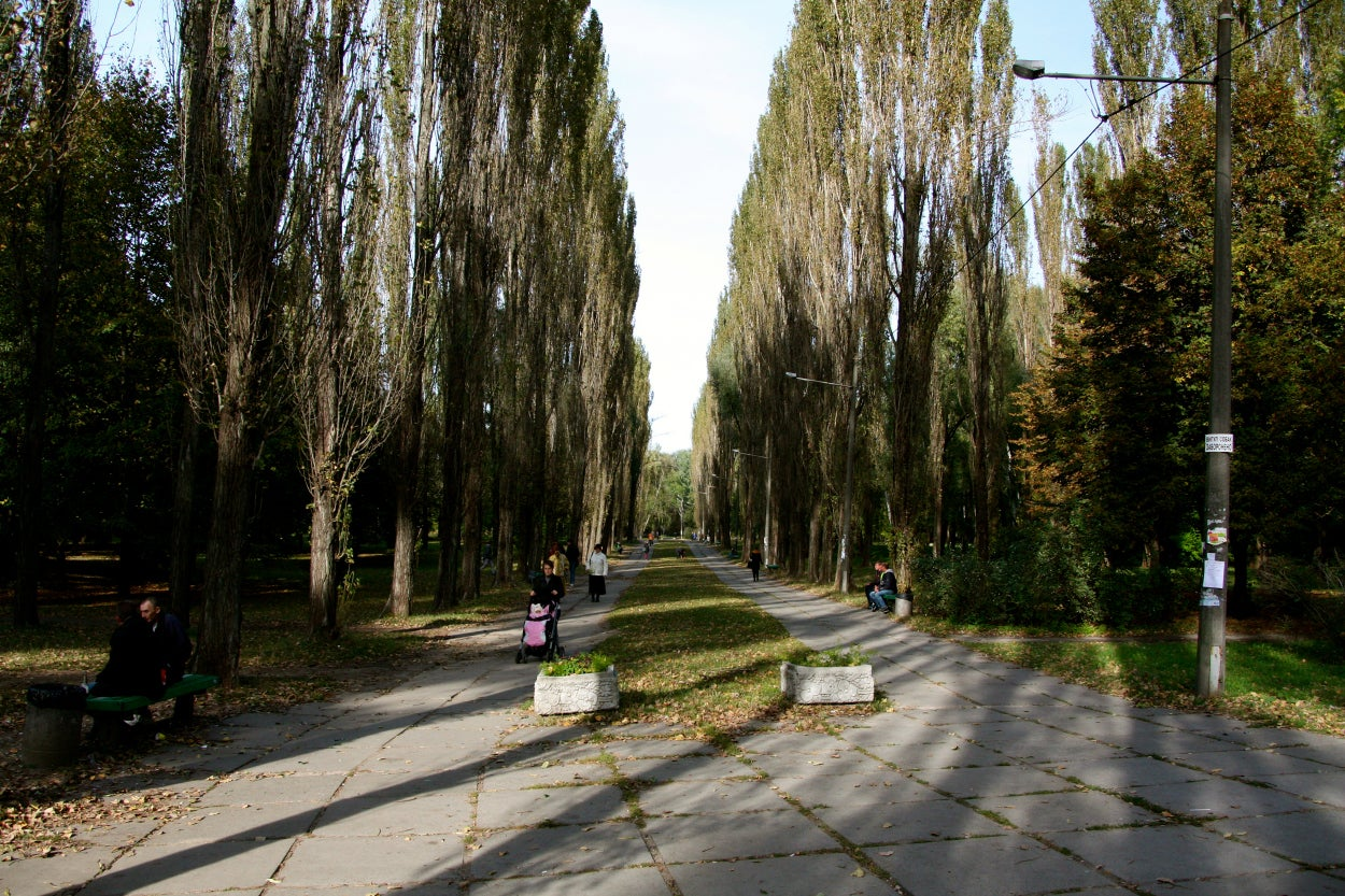 A path through the park near Babi Yar.