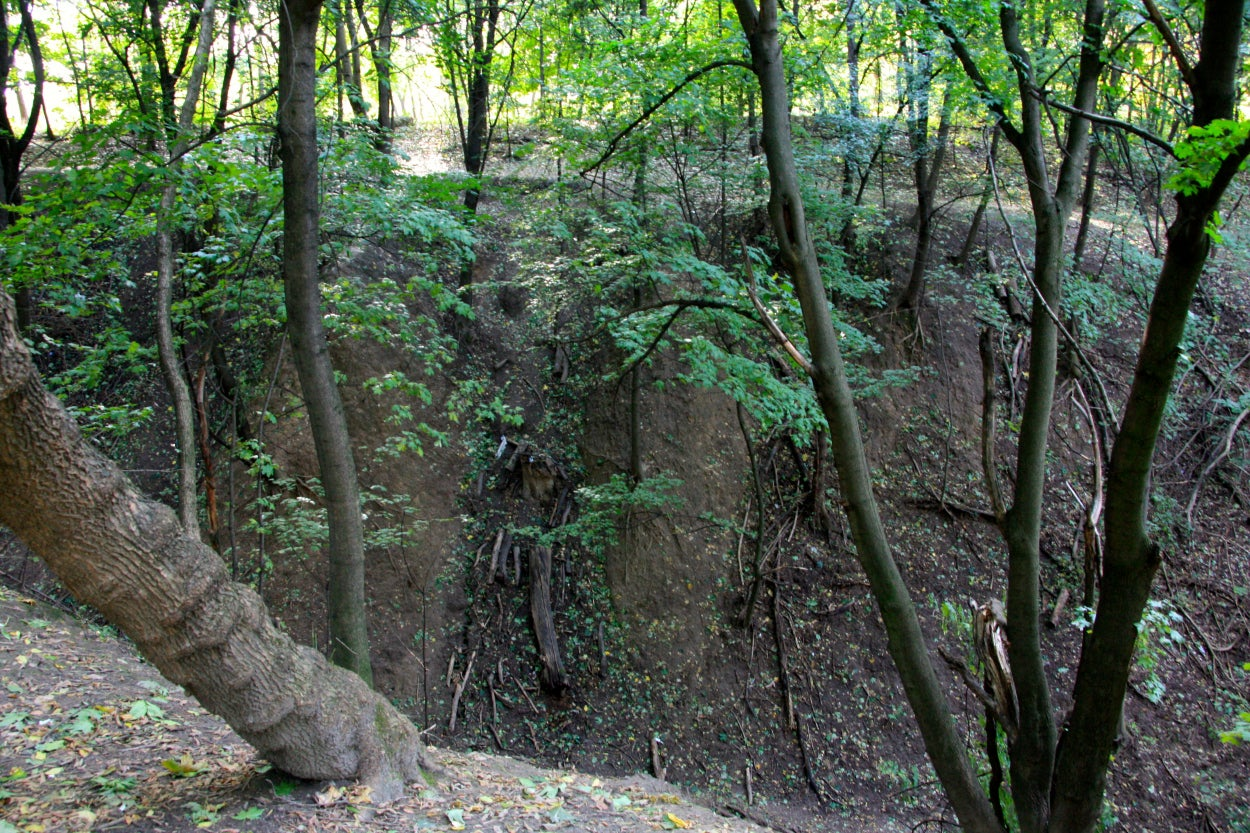 Trees cling to the steep, muddy walls of the Babi Yar ravine. (Photos: Nolan Peterson/The Daily Signal)