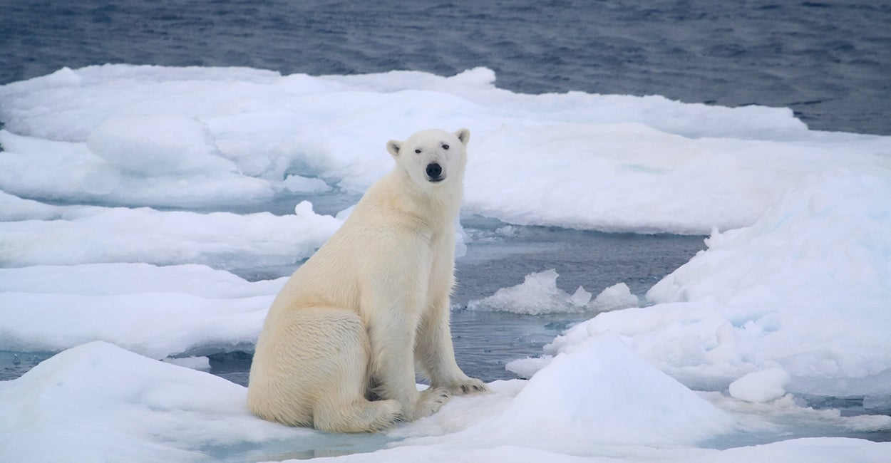 Why Progressive Activists Want to Silence the Truth About Climate Change