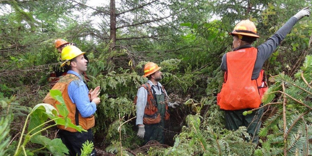 Foresters survey Alaska coastal young growth in logged-over sites such as this for future timber to replace old growth in the forest industry—if transition plan is allowed to go forward. (Photo: U.S. Forest Service)