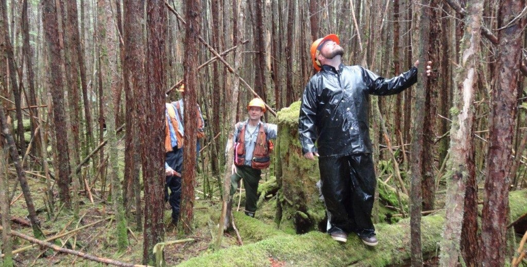 """Favorable growing conditions can turn logged sites into a """"skinny toothpick factory"""" like this, but selective thinning lets the best young trees grow into sizeable replacements for old growth. (Photo: U.S. Forest Service)"""