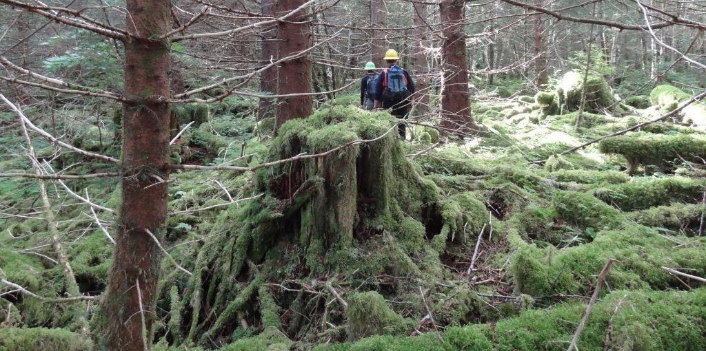 Yesterday's old-growth logging sites are capable of repeated cycles producing young-growth timber for tomorrow's sustainable forest industry. (Photo: U.S. Forest Service)