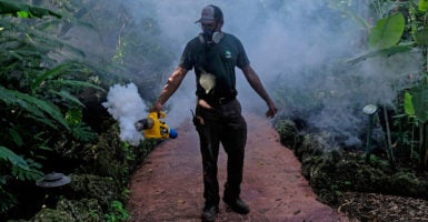 A grounds keeper at Pinecrest Gardens in Miami uses a blower to spray pesticide to kill mosquitoes as the number of Zika cases originating in Florida continues to rise. (Photo: Gaston De Cardenas/Miami Herald/TNS/Newscom)