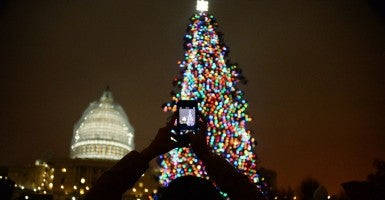 The 2014 Capitol Christmas Tree. (Photo: Olivier Douliery/Newscom)