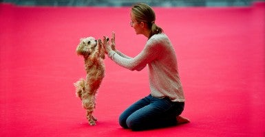 "The Havanese dog ""Paula"" and Cora Czermak, who will participate at the Dogdance European championship, pose at the pet fair opening press conference ""Animal"" in Stuttgart, Germany. (Photo: Newscom)"
