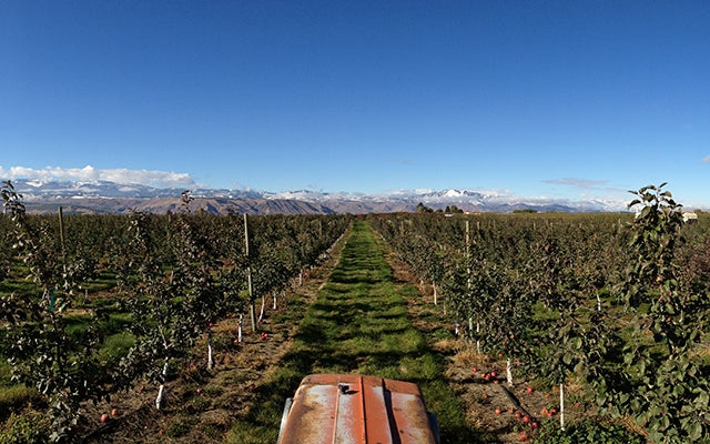 Dudek Orchards, courtesy of Britt Dudek