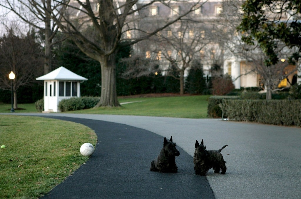 President Bush's dogs play on the driveway