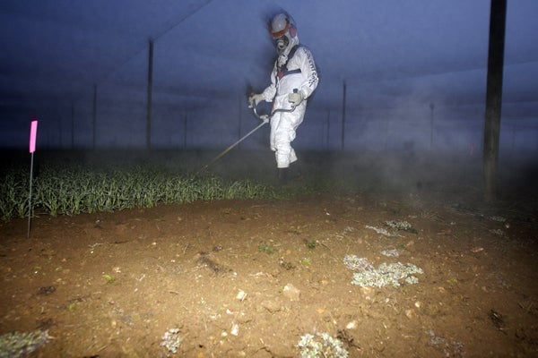 Greenpeace activist destroys genetically modified crops in Australia - July 14, 2011