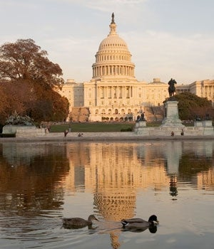 Ducks in front of the Capitol