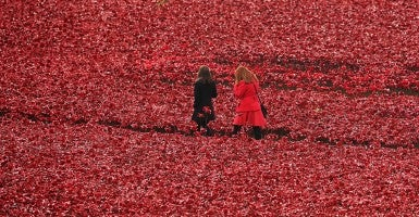 "Military cadet, Harry Alexander Hayes, places the last ceramic poppy in the moat of Tower of London to mark Armistice Day. The installation, ""Blood Swept Lands and Seas of Red,"" by artists Paul Cummins and Tom Piper consists of 888,246 ceramic poppies—representing each of the commonwealth servicemen and women killed in the first world war. (Photo: Newscom)"