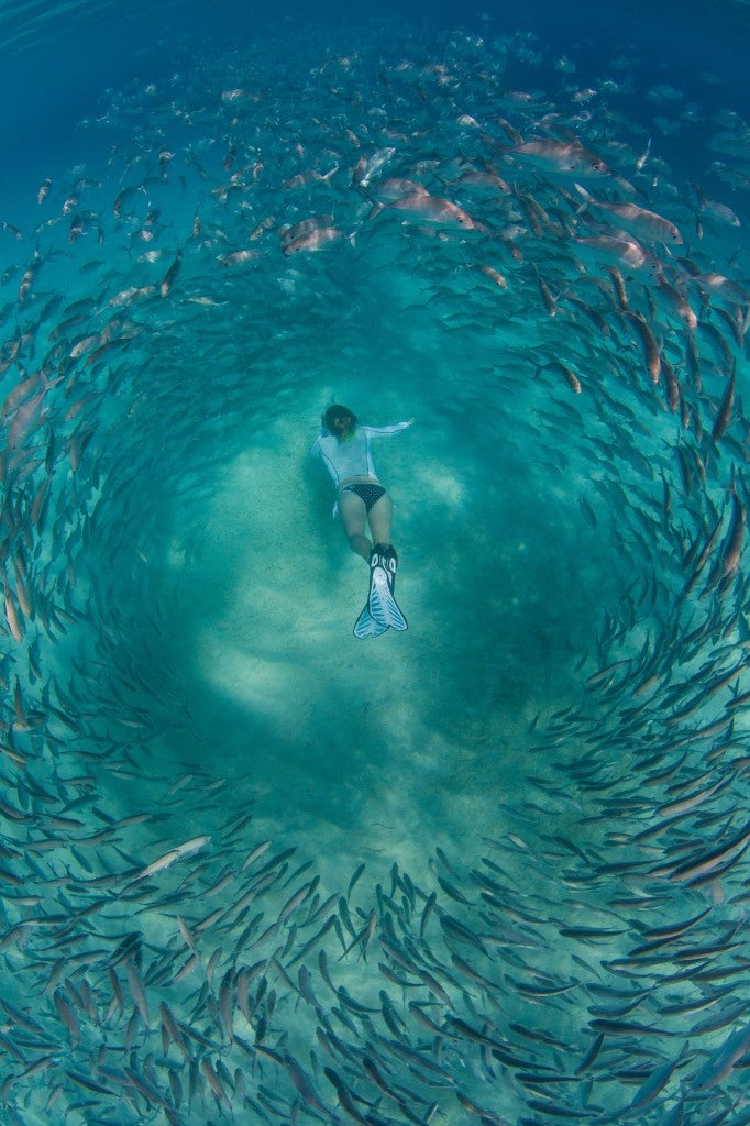 Diver Whitney De Neef delved into the colony while her husband Steve photographed her dives from above. (Photo: Steve Neef/Newscom)