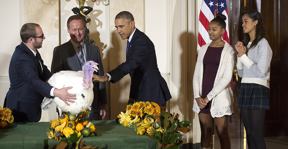 President Barack Obama pardons Cheese, the 2014 National Thanksgiving Turkey. (Photo: Kevin Dietsch/Newscom)