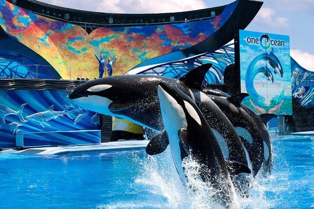whales-seaworld