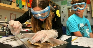 In California, students dissect a frog. (Photo: CreditCharlie Neuman/ZUMA Press/Newscom)